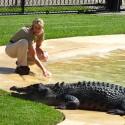 Croc's at Australia Zoo